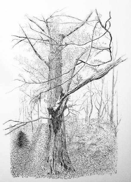 l'arbre au bord du sentier - décembre 2017