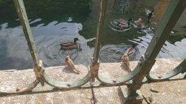 Un déjeuner au bord de l'eau avec peuples des airs, ce pourrait être à Amiens, mais ci c'est à L'Isle-sur-la-Sorgue