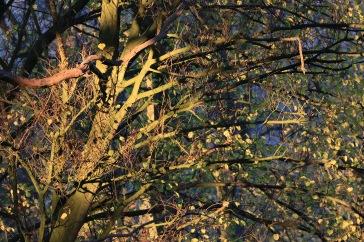 181118 arbre_5593