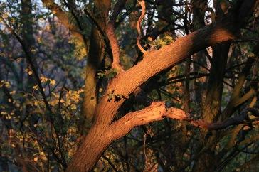 181118 arbre_5594